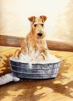 """Saturday Night"" A Limited Edition Irish Terrier Print"