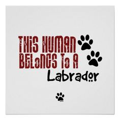 Funny Labrador Dog Quotes And Sayings Pointer Puppies, Pointer Dog, Lab Puppies, Shih Tzu Puppy, Shih Tzus, Dog Quotes Funny, Funny Dogs, Dog Sayings, Puppy Love