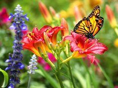 Marie Selby Botanical Gardens : Florida's 11 Best Botanical Gardens : TravelChannel.com
