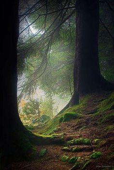 Naturbilder: schöne #Naturbilder #Natur #Baum #Wald