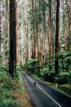 No description, but it looks like it could be the Mountain Ash temperate rain forest in the Healesville / Marysville area in Victoria.