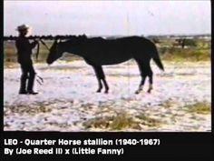 RDVideo - Leo - Quarter Horse stallion (1940-1967)