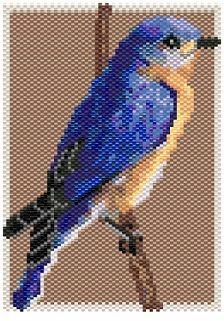 Eastern Bluebird (small)