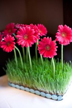 Rather than a vase, love this way of displaying Gerbera Daisies