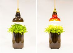Upcycled glass bottle lamps