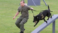 When handlers retire they often have to leave their working partners behind. It's devastating to break the bond, and this cop was not going to do it. Agility Training For Dogs, Dog Agility, Cop Dog, Military Operations, Military Dogs, Cool Photos, Criminal Justice, Career, Carrera