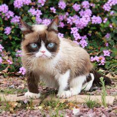 Blank Grumpy Cat purple flowers