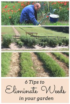 6 Tips To Eliminate Weeds In Your Garden - You might want to rethink your garden when you see these quick tricks!