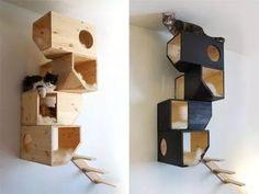 casitas para gatos