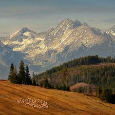 Medveš je rázovitá zvlnená sopečná krajina ja juhu Slovenska pod vrcholom Medveš v Cerovej vrchovine.