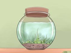 How to Make a Closed Aquatic Ecosystem (with Pictures) - wikiHow