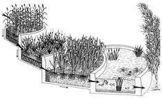 Epurez-vous même vos eaux usées grâce aux plantes Fonctionnement du filtrage par roseaux