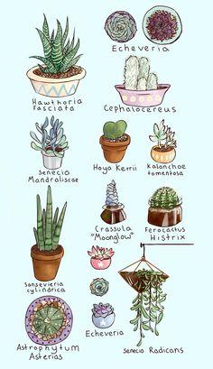 Super cactus and succulent garden indoor Ideas Cacti And Succulents, Planting Succulents, Garden Plants, House Plants, Planting Flowers, Sky Garden, Succulent Gardening, Garden Bedroom, Bedroom Plants