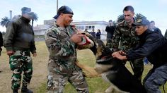 Osama Bin Laden Raid: Navy SEALs Used Military Dog in Pakistan Compound - ABC News