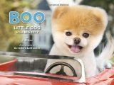 Boo the Dog - The World's Cutest Dog  This is what Lauren wants for Christmas... she LOVES this dog!