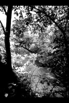 The Creek <3