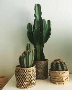 Love my cactuses #edelcactus