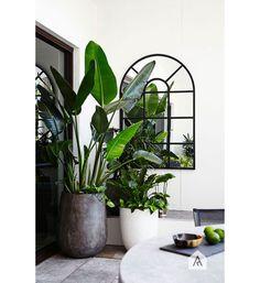 bananenplant-interiorjunkie6