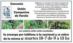 Correo - danala2000@hotmail.com Plants, Vegetable Garden, Plant, Planets
