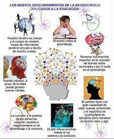 Los nuevos descubrimientos de la Neurociencia aplicados a la educación #brain vía http://www.pro-paz.org/