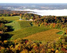 Stone Hill Winery, Hermann, MO.  My favorite Fall activity.  Overlooking the bluffs of the Missouri River - amazing.