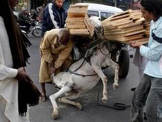 """Donkey's """"life"""" in Pakistan...  We are such a disguisting race, my stomach hurts!"""