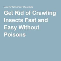 Get Rid of Crawling Insects Fast and Easy Without Poisons