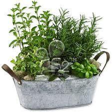 Galvanized herb garden