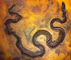 47 million year old Boa snake from the Messel Pit Fossil Site - Senckenberg museum, Frankfurt, Germany. | Photo by Paul Williams, via Flickr. www.IronAmmonitePhotography.com