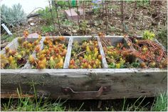 grow and resist reuse repurpose in the garden