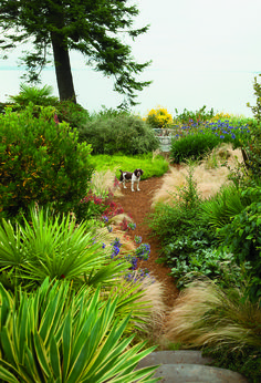 Dan Hinkley's garden