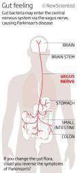 Vagus Nerve - fecal microbiota transplant - autoimmune disease, Parkinson's, CFS