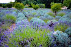 Love French, Plants, Flora, Plant, Planting