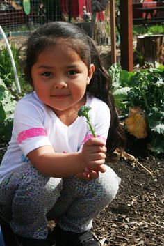 Nutrition Basics - The Nutrition Basics Project coordinates and collaborates with USDA-funded nutrition activities in Mendocino County.