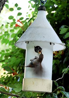 Hungry Baby Wren and Mama