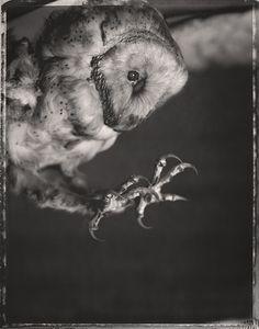 "PhotographerDavid Ellingsen""EXHIBITION - SKYLIFE"""