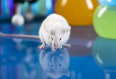 Read about a study that shows a combination of low-dose irradiation and Cymbalta has positive effects in a fibromyalgia animal model.