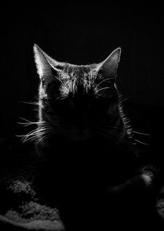 Mi gato Walter