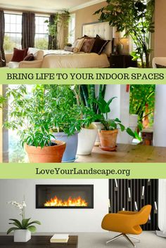 Bring some green inside this winter with these helpful tip from the pros