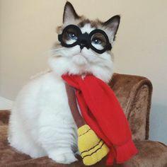 Cat Quidditch. #imgur