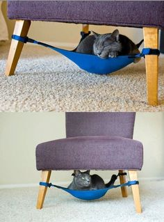 Okay - not for dogs but cool. Cat Hammock