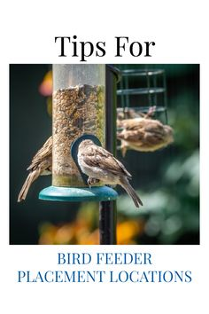 You may not be getting the most out of your bird feeder if it's not in the right location. Here we help you identify some great places to put your feeder in your backyard garden. Places where wild birds can find it, be safe from predators, and free from the elements. Start attracting more birds while keeping them safe.