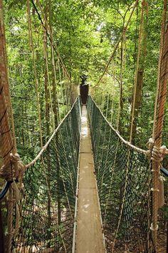 Picture of canopy bridge in taman negara, malaysia stock photo, images and stock photography. Kuala Lumpur, Putrajaya, Costa Rica Travel, Asia Travel, Parc National, National Parks, Bangkok, Travel Around The World, Around The Worlds