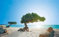 #Aruba - Top 20 Most Famous Beaches in the World by Sports Illustrated | Fabulous Traveling .com