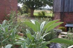 Frische #Kräuter aus dem Garten zur Verwendung für Tees, Limonaden, Backwaren und Speisen werden bei uns gern verwendet.