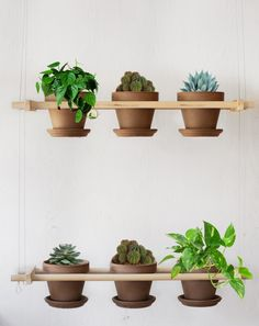 Greenery into the flat! Cat's would love this!! -Daintry Squid