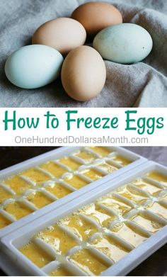 Wonderful Images Excellent Pic How to Freeze Eggs - One Hundred Dollars a Month Strategies The. Thoughts Probably the most critical difficulties in your kitchen can be food storage area methods. Freezing Eggs, Freezing Celery, Freezing Milk, Freezing Vegetables, Canned Food Storage, Freezer Cooking, Cooking Tips, Cooking Games, Freezer Hacks