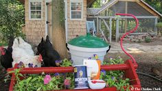 The Chicken Chick®: Chicken Heat Stress, Dehydration and Homemade Electrolyte Solution