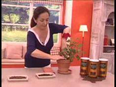 """La Botica """"Cuida Tu Vida"""": Café, un abono para las plantas - YouTube"""