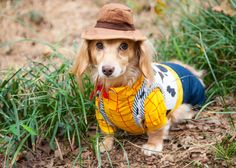 14 things you only know if you own a sausage dog AKA Dachshund Dachshund Funny, Dachshund Breed, Long Haired Dachshund, Daschund, Small Dog Breeds, Small Dogs, Best Apartment Dogs, Standard Dachshund, Clever Dog